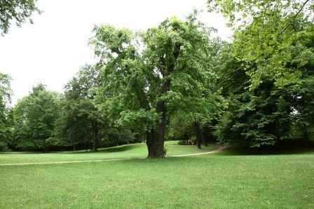 Bild Stadtpark Görlitz