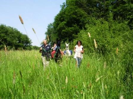 Bild Wildkräuterwanderung Seibersbach