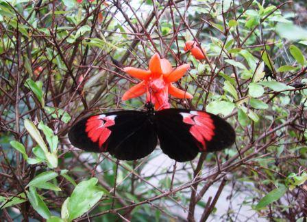 Bild Schmetterlingsfarm Trassenheide