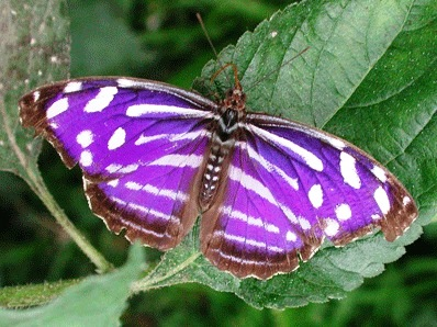 Bild Schmetterlingspark Sassnitz