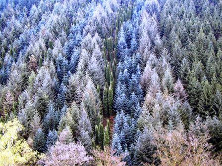 Bild Arboretum Lindenberg