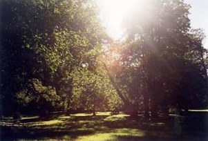 Bild Landschaftspark Dammereez