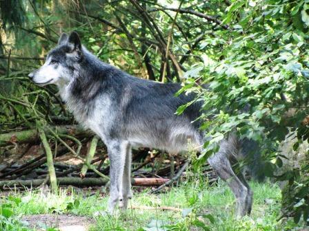 Bild WildtierPark Edersee Edertal