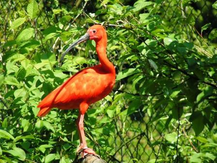 Bild Vogel- und Naturschutztierpark Herborn