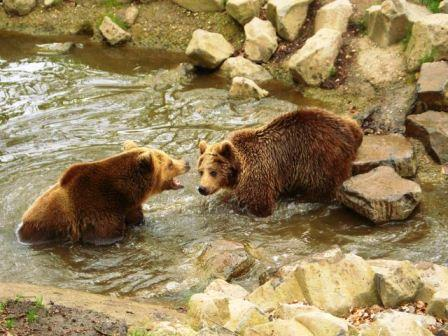 Wildtierpark Knüll