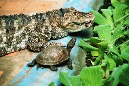 Bild Krokodilfarm Golzow