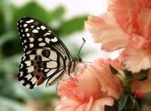Bild Jonsdorfer Schmetterlingshaus