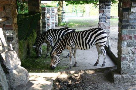 Bild Tierpark Hamm