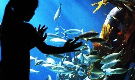 Bild Sea Life Oberhausen