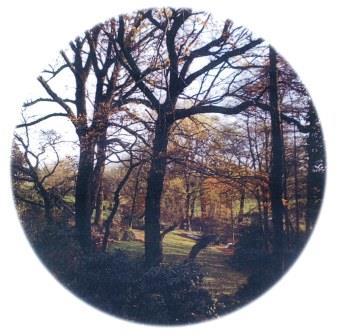 Bild Gärten und Arboretum Trautmann Essen