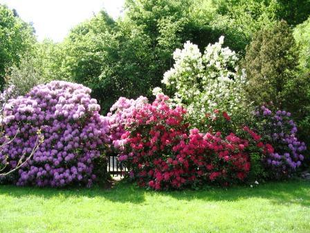 Bild Sammlergarten Behner Gummersbach