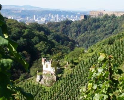 Bild Weingut Göhlen  Koblenz