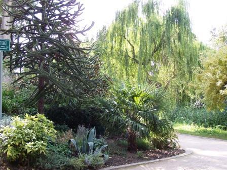 Bild Stadtgarten Deidesheim