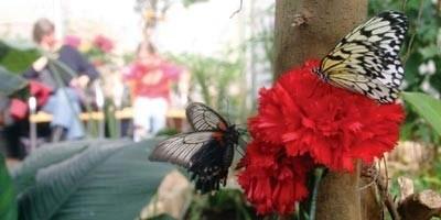 Bild Insektenmuseum und Schmetterlingsfarm Wunstorf